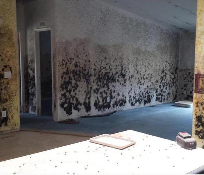 Mold Remediation Facts About Mold and Dampness