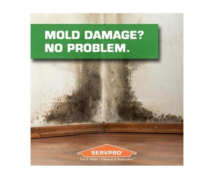 Mold Remediation Identifying A Black Mold Problem