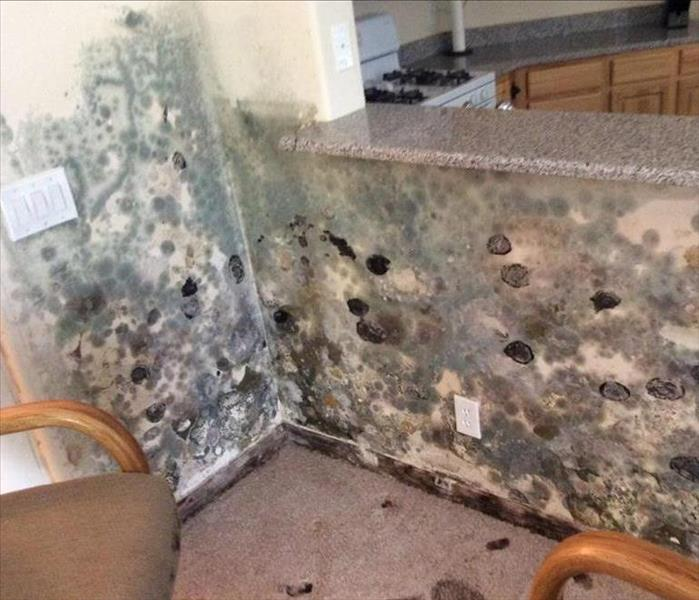 Mold Remediation Henderson Vacation Home Covered In Mold
